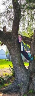 zakariya_tree